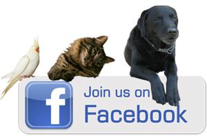 התחבר אלינו בפייסבוק